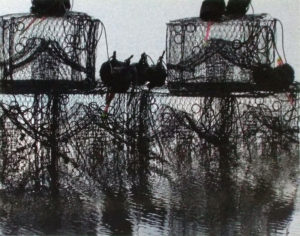 Crab Pots in High Water, Photography by Carol Wollstein - Size 11in x 14in (February 2017)