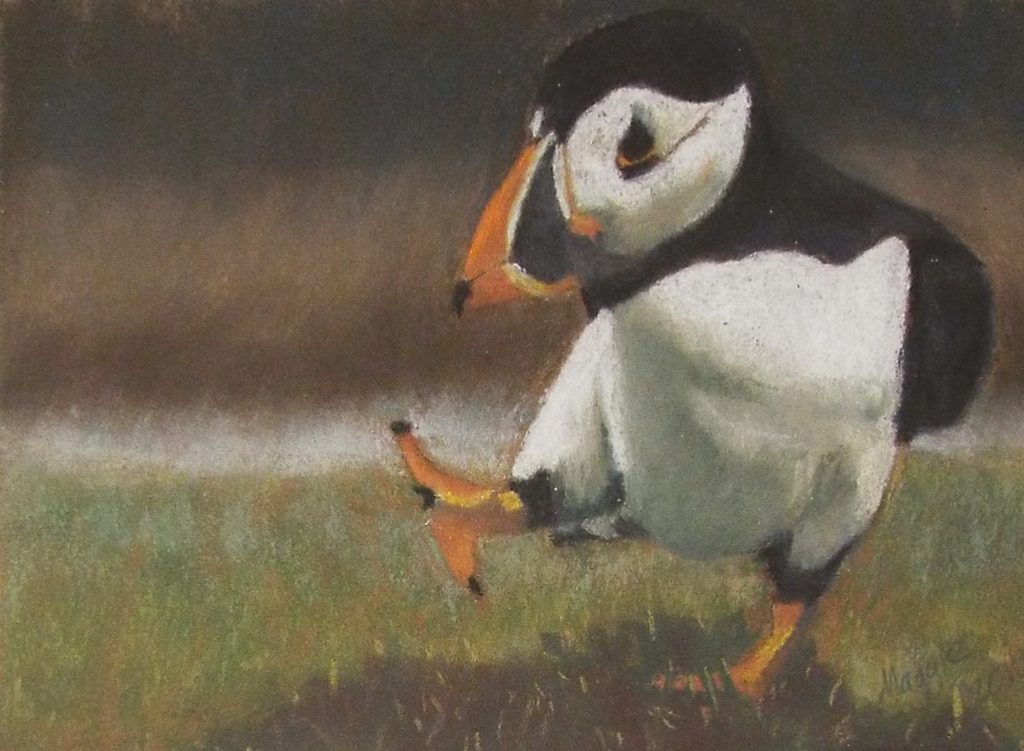 Puffin Punch, Soft Pastel on Sanded Paper by Maggie Bice - Size 5.5in x 7.5in (October 2016)
