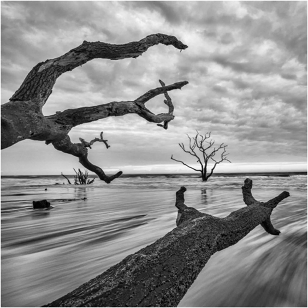 HONORABLE MENTION: Reaching to the Sea, Photography by Mary Lynn Wolfe - Size 16in x 16in (February 2017)