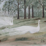 White Peacocks, Oil by Sarah Flinn, Size 11in x 14in (June 2017)