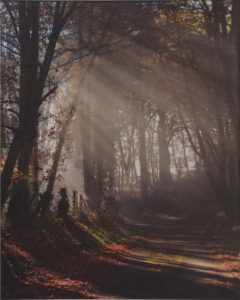 Path Less Traveled, Metallic Photograph by Deborah Herndon, Size 20in x 16in Framed 30in x 24in (July 2017)