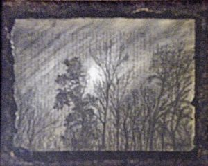 Midnight Trees, Pastel and Charcoal by Sheryl Zepeda (October 2012)
