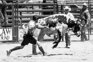 Bull Puncher, Photography by Addison Likins, 16in x 24in, $180 (February 2018)