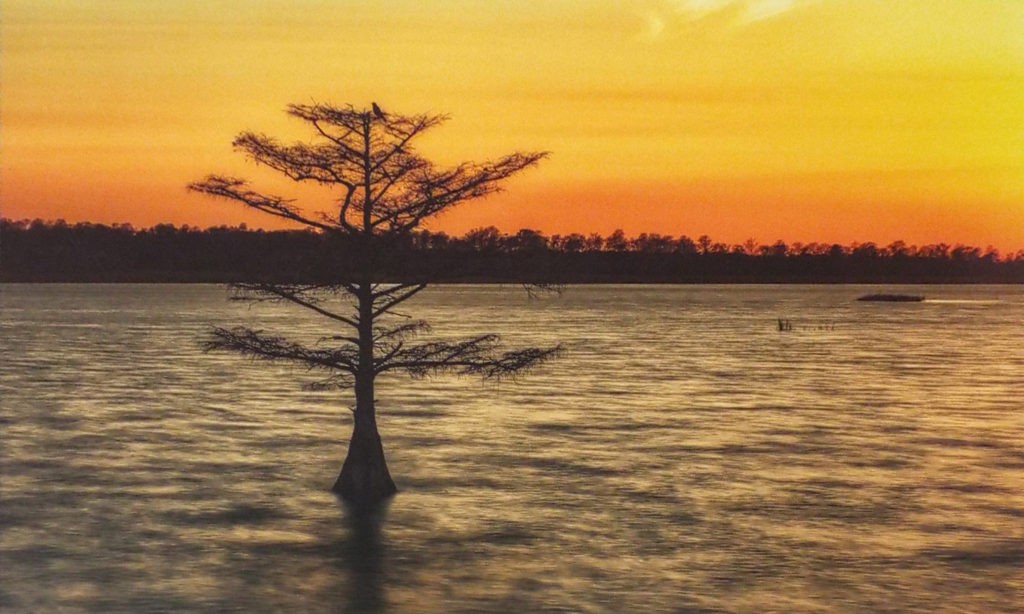HONORABLE MENTION: Cypress Sunset, Photography by C. Renee Martin, 20in x 16in, $180 (February 2018)