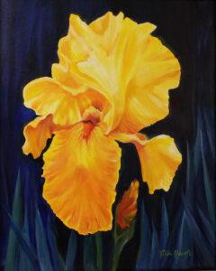 Golden Splendor, Oils by Rita Kovach, 20in x 16in, $250 (July 2019)