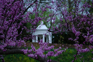 Chatham Gazebo Purple Dayze by Dawn Whitmore (CBTC October 2019)