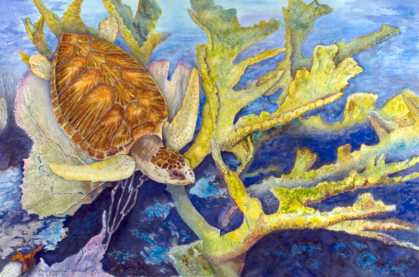Sea Turtle by Lorrie Tucker (MG: June 2014)