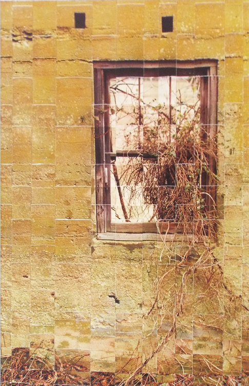 THIRD PLACE: Window and Vines, Traditional Color Photography by Michael C Habina (February 2016)